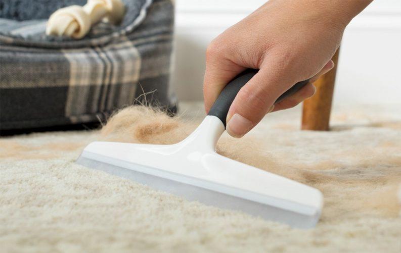 6 советов, как быстро очистить дом от шерсти животных