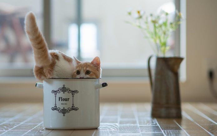 кот на кухонном столе