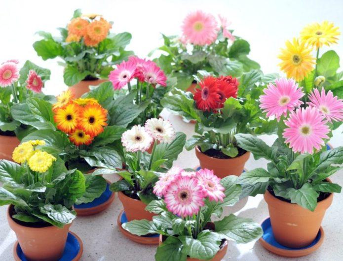 Комнатные растения, которые идеально подходят каждому знаку зодиака