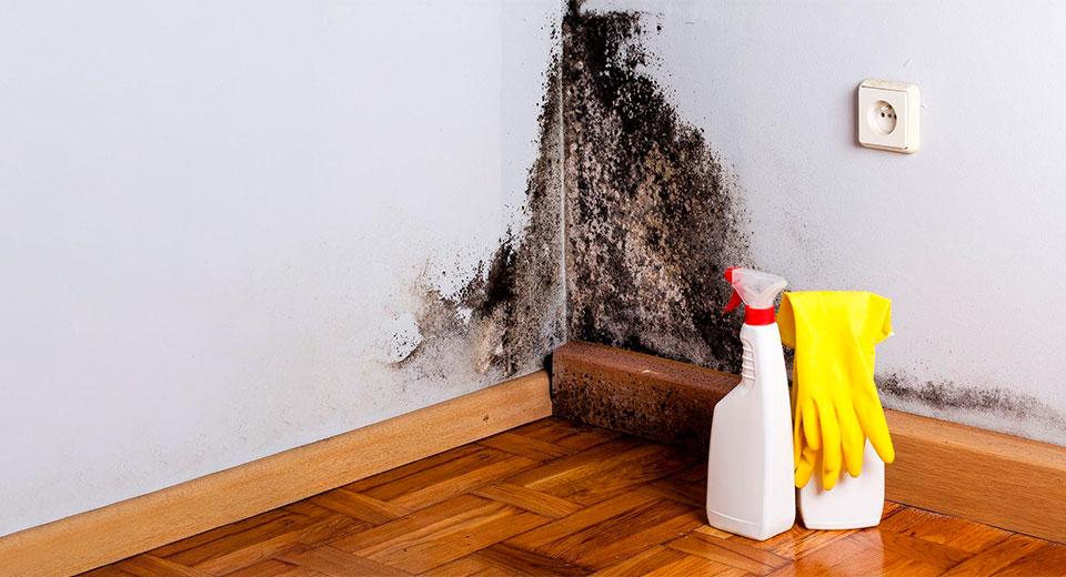 Как предотвратить плесень в доме и что делать, если она уже появилась
