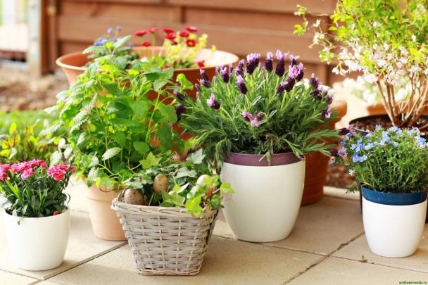5 комнатных растений для спальни для здорового и полноценного сна