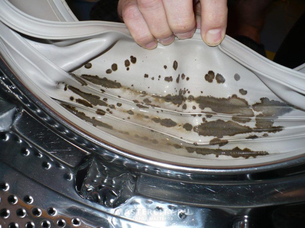 Плесень в стиральной машинке: 4 средства с проверенной эффективностью