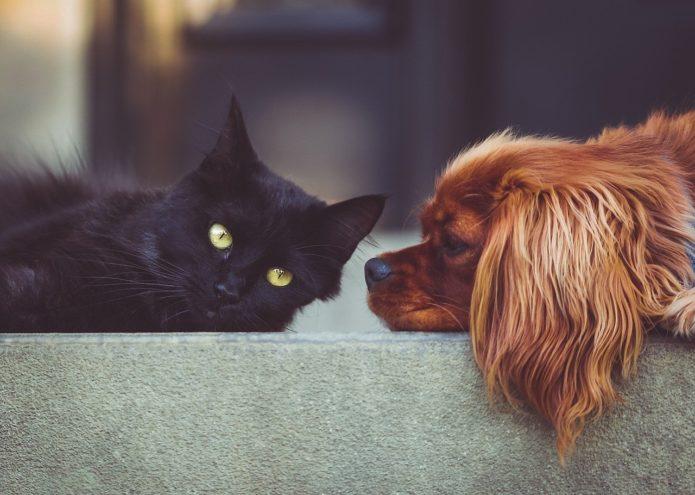 Как ухаживать за домом, в котором живут домашние животные