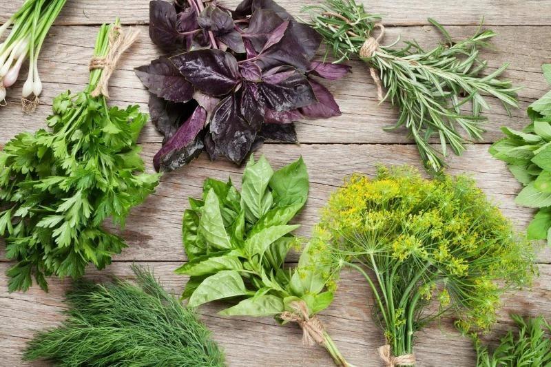 Как я храню зелень в холодильнике, чтобы она оставалась дольше свежей