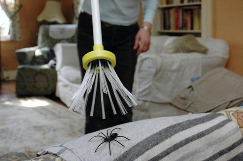 Что по приметам ждет человека, который убил в доме паука