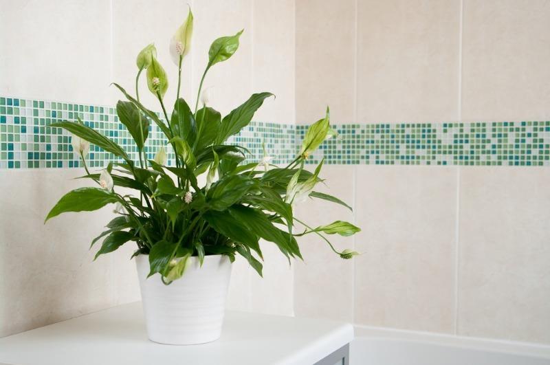 11 комнатный растений, которые можно «поселить» в ванной комнате
