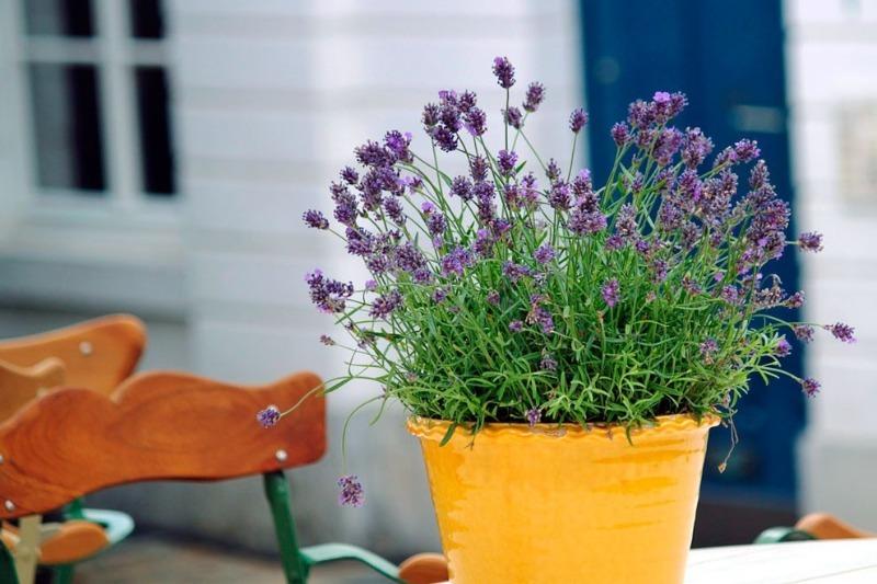 10 цветов для спальни, которые благотворно влияют на самочувствие человека