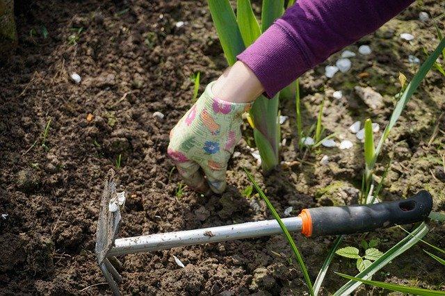 4 важных дела, которые нужно сделать в саду осенью
