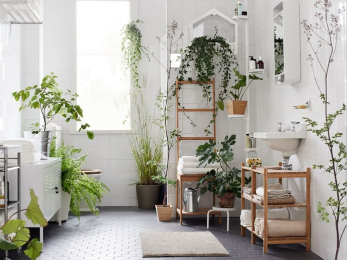 растения в белой ванной комнате
